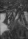 """A Tangle, scratchboard, 7""""H x 5""""W. 2013"""