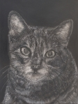 "Kitten Head, scratchboard, 12""H x 9""W"