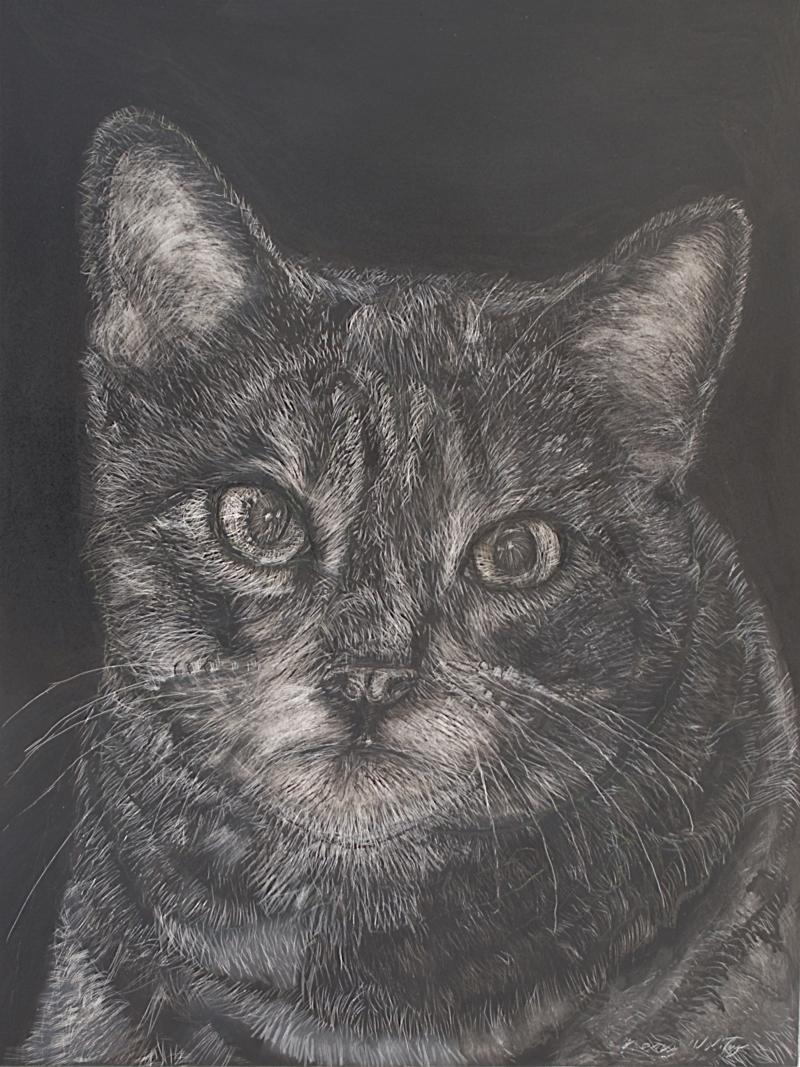 """Kitten Head, scratchboard, 12""""H x 9""""W"""