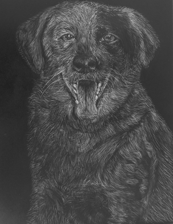 "Dog Head, scratchboard, 10""H x 8""W"