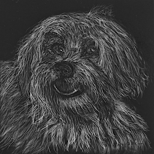 "Butterscotch, scratchboard, 6"" x 6"""