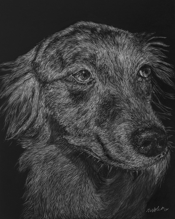 "Nikki, scratchboard, 10"" x 8"" (sold)"