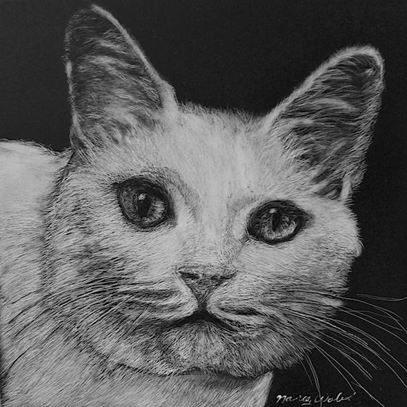 """White Cat, scratchboard, 6"""" x 6"""""""