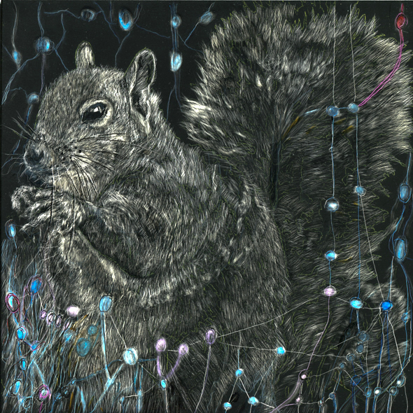 """Memories of the Squirrel scratchboard and ink, 8"""" x 8"""", 2016"""