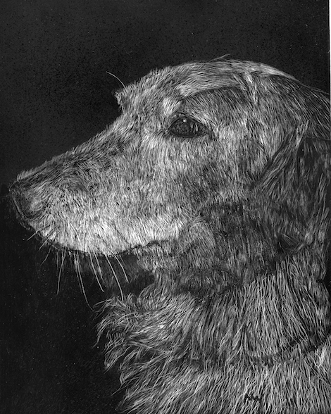 Nikki, scratchboard, 10 x 8 in., 2016
