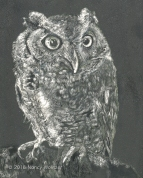 Owl of Death, scratchboard, 10 x 8 in., 2018