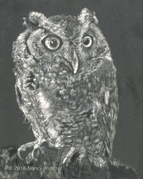Owl of Death, scratchboard, 10 x 8 in., 2018
