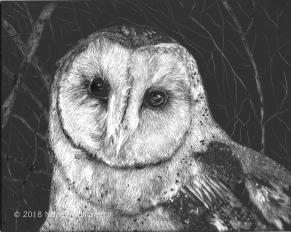 Owl of Secrets, scratchboard, 8 x 10 in., 2018