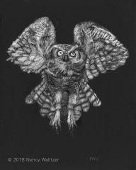 Flying, scratchboard, 10 x 8 in., 2018